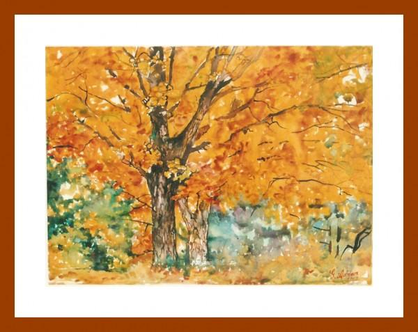 alte Picturi Lumina si culoare