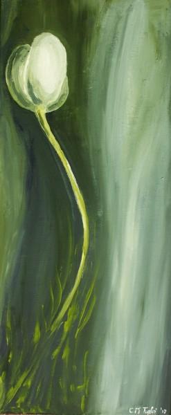 alte Picturi White tulip