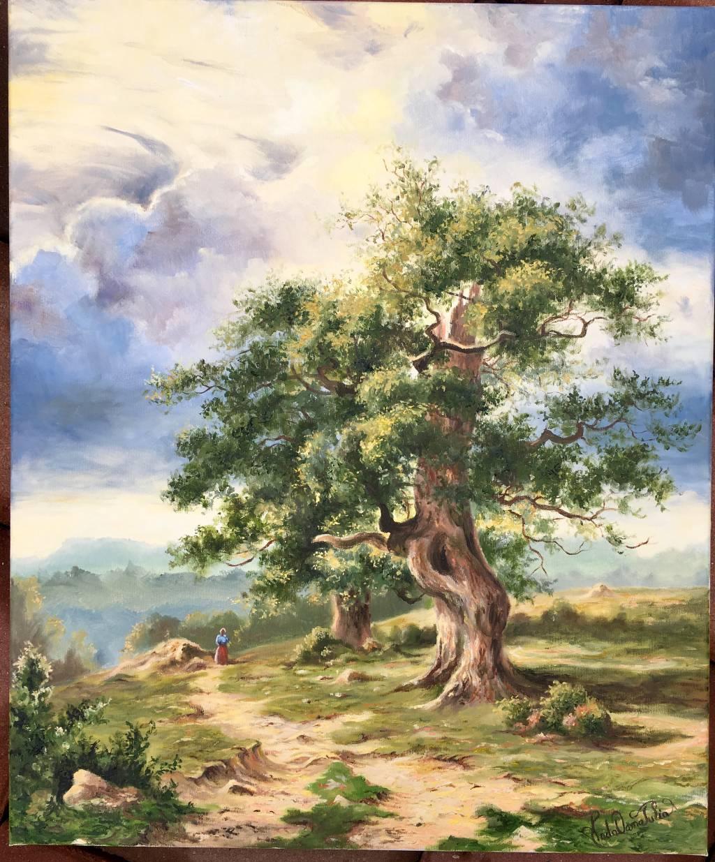 Poza Vechi stejar