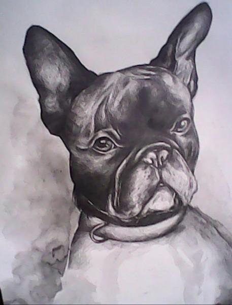 Picturi alb negru Bulldog