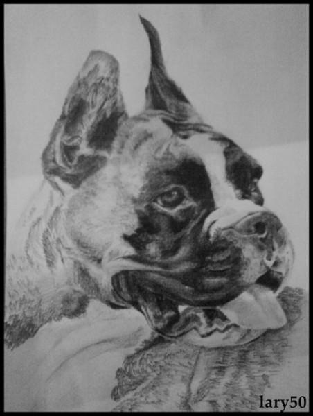 Picturi alb negru Boxer