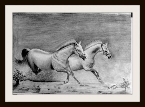 Picturi cu animale Cai in galop