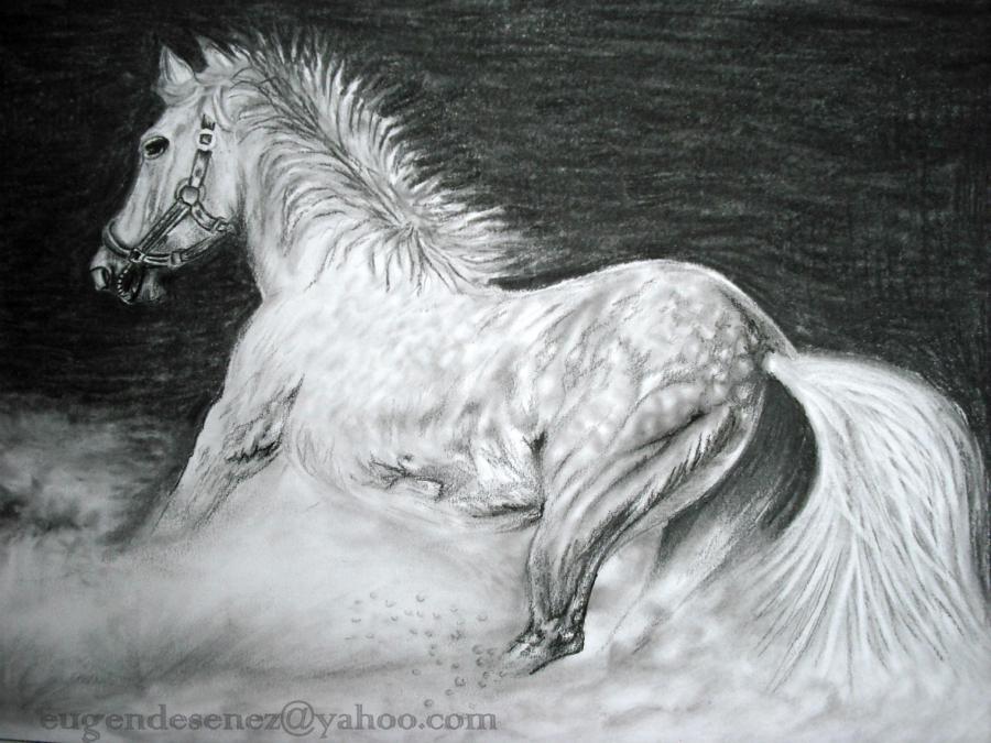 Picturi cu animale  furios
