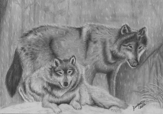 Picturi cu animale Lupi iarna