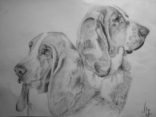 Picturi cu animale Basset hound dog portrait
