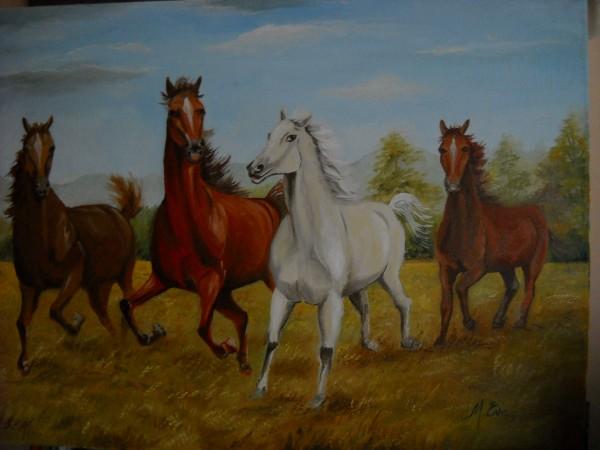 Picturi cu animale Cai in libertate