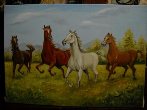 Picturi cu animale Cai liberi