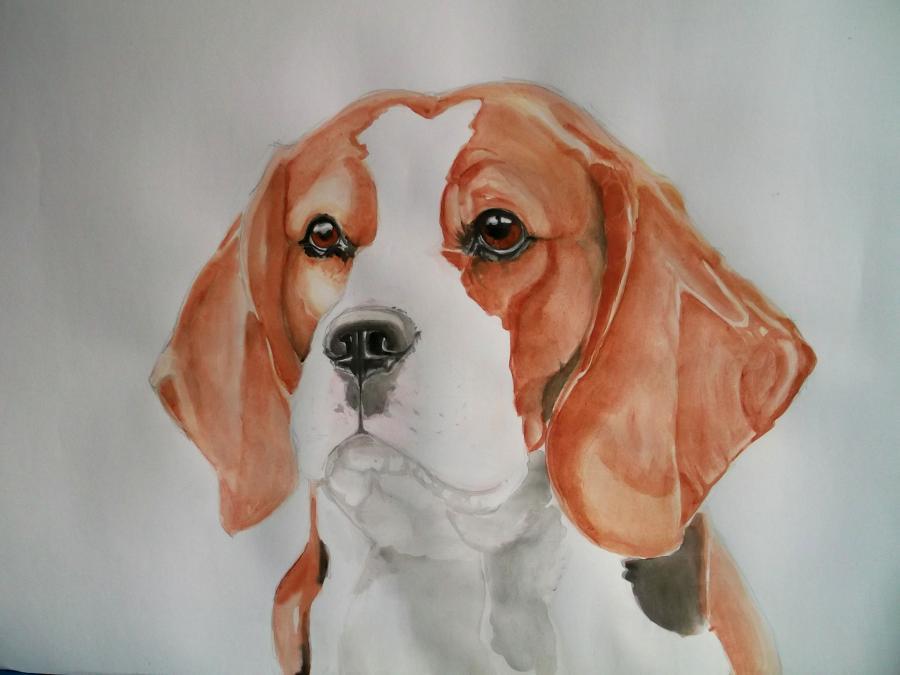 Picturi cu animale Beagle
