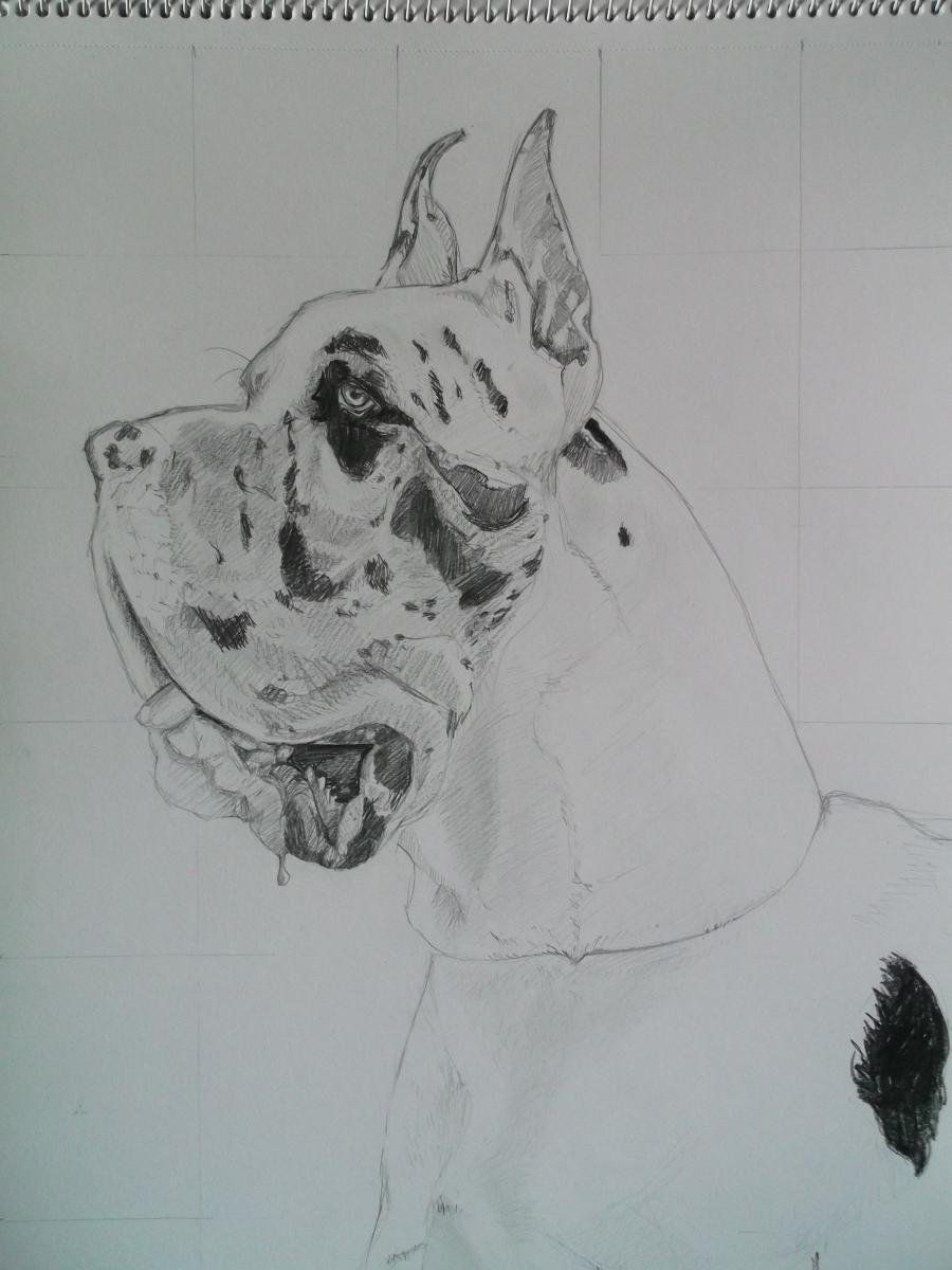 Picturi cu animale Dog German