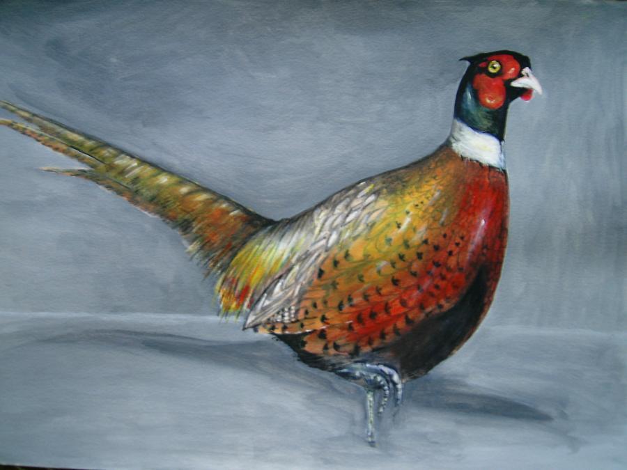 Picturi cu animale Fazan iarna