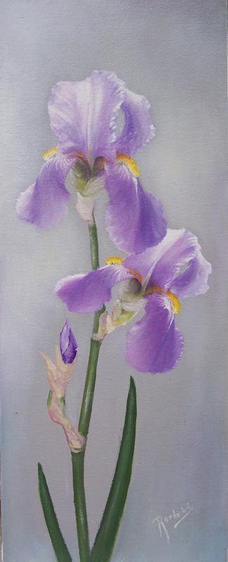 Picturi cu flori Iris A