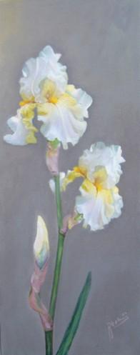 Picturi cu flori Iris alb