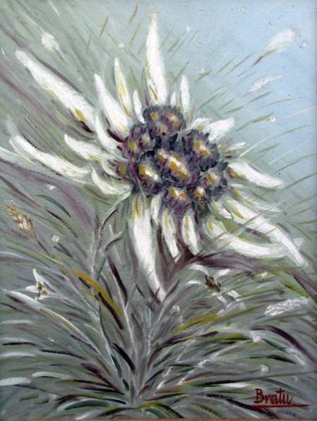 Picturi cu flori Floare.de.colt