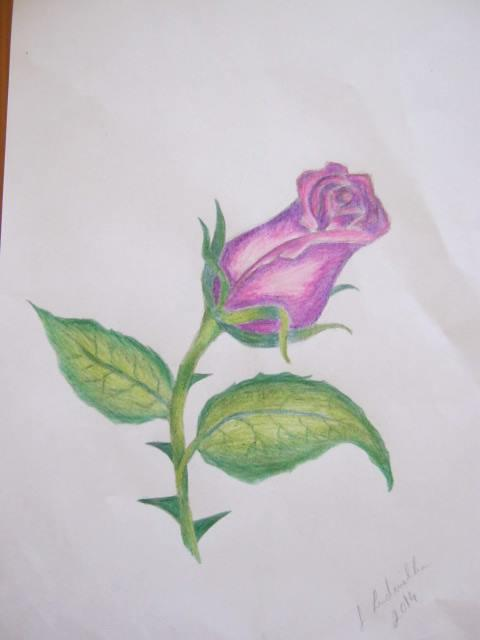 Picturi cu flori Flori in creion 3