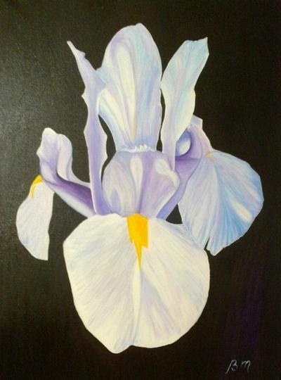 Picturi cu flori Floare de iris