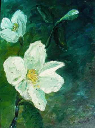 Picturi cu flori Flori de iasomie