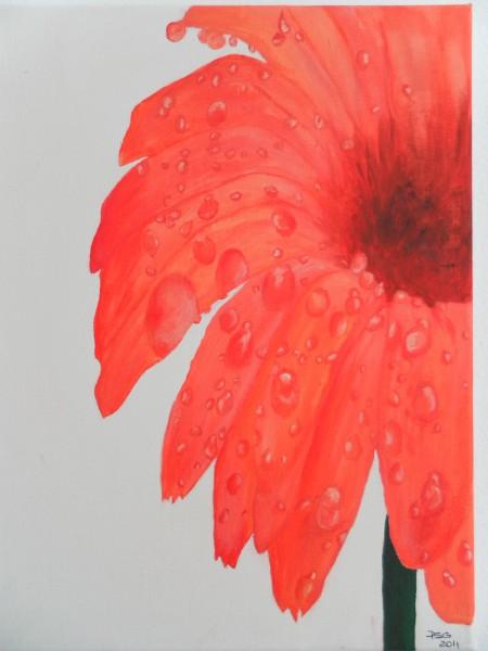 Picturi cu flori Gerbera inlacrimata