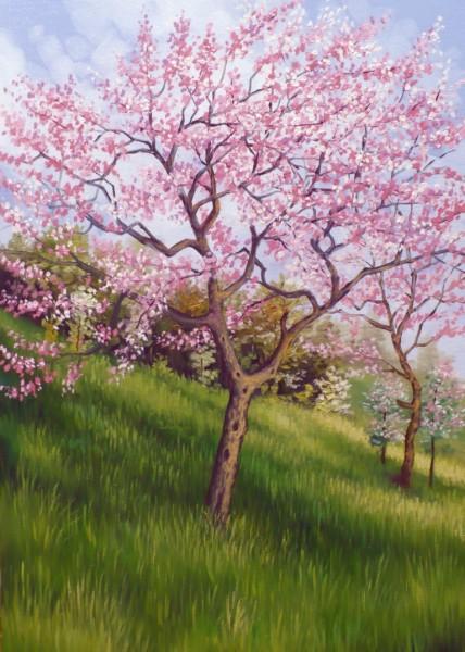 Picturi de primavara Roz si alb de primavara