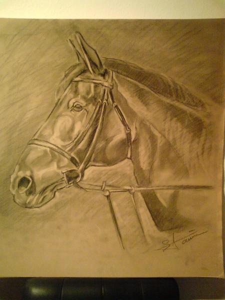 Picturi in creion / carbune Cap de cal