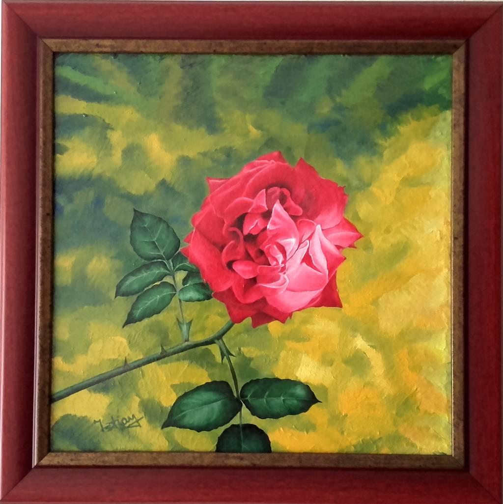 Trandafir 30 cm / 30 cm