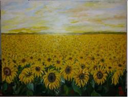 Picturi cu flori Camp vast cu floarea so