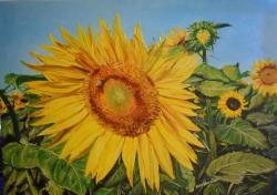 Picturi de vara Peisaj rustic ...Floarea