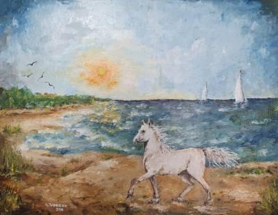 Poza Cal alb pe malul mării