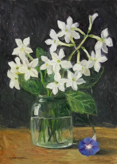 Poza flori de regina noptii in borcanel