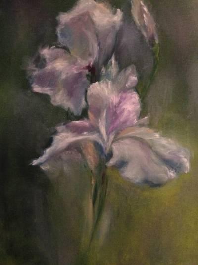 Poza Iris