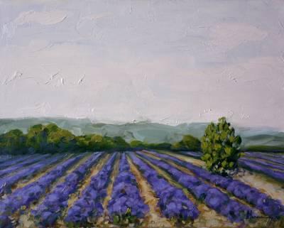Poza Lavender field