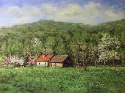 Poza Primavara montana