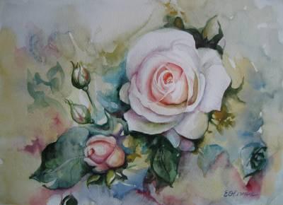Poza Roses