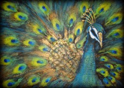 Picturi abstracte/ moderne Asian peacock