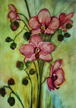 Picturi acuarela Buchet de orhidee 2