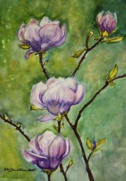Picturi acuarela Magnolii in floare