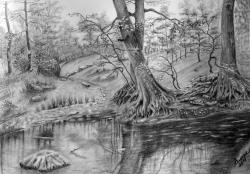 Picturi alb negru oglinda din padure