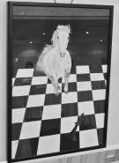 Picturi alb negru Provocare