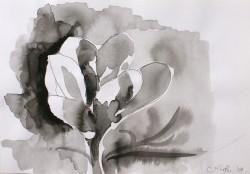 Picturi alb negru Flower 1