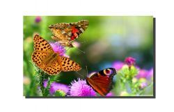 Picturi canvas Flori si fluturi