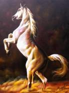 Picturi cu animale Cal alb