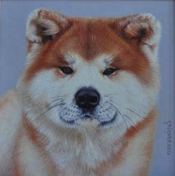 Picturi cu animale portret Akita