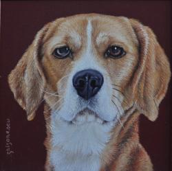 Picturi cu animale portret Beagle