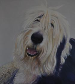 Picturi cu animale portret ciobanesc englezesc