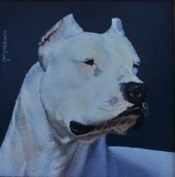 Picturi cu animale portret dog argentinian