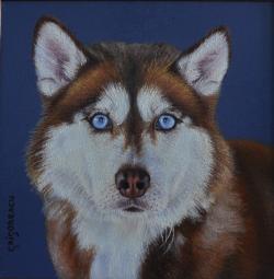 Picturi cu animale portret Husky