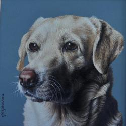 Picturi cu animale portret labrador