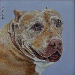 Picturi cu animale portret pittbul Daddy Millan