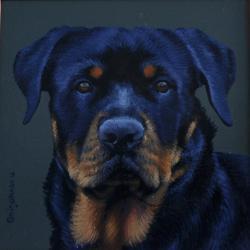 Picturi cu animale portret Rottwailer