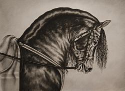 Picturi cu animale Calul negru