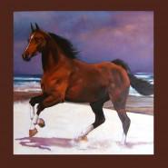 Picturi cu animale Cal pe plaja la mangalia